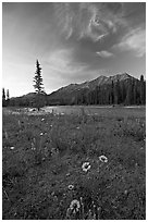 Sunflowers, Kootenay River, and Mitchell Range, sunset. Kootenay National Park, Canadian Rockies, British Columbia, Canada (black and white)