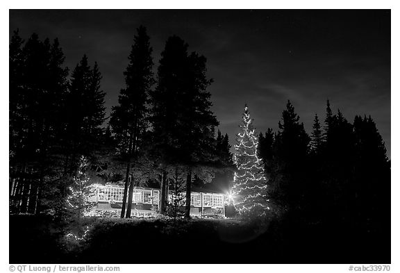 Black And White Picture/Photo: Lit Christmas Trees, Cabin