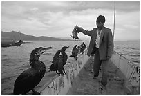 Cormorant fisherman regroups his birds at the end of fishing session. Dali, Yunnan, China ( black and white)