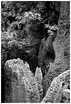 Details of grey limestone pinnacles of the Stone Forst. Shilin, Yunnan, China (black and white)