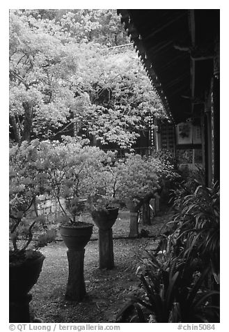 Courtyard of the Wufeng Lou (Five Phoenix Hall) with spring blossoms. Lijiang, Yunnan, China (black and white)