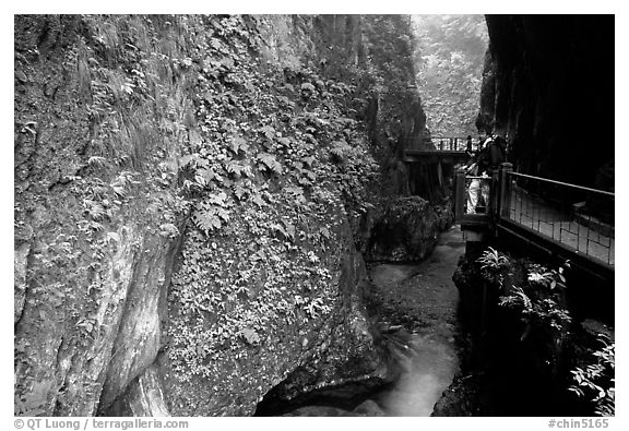 Narrow Gorge between Qingyin and Hongchunping. Emei Shan, Sichuan, China (black and white)
