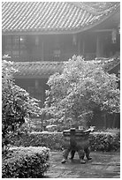Wannian Si temple in the fog. Emei Shan, Sichuan, China ( black and white)