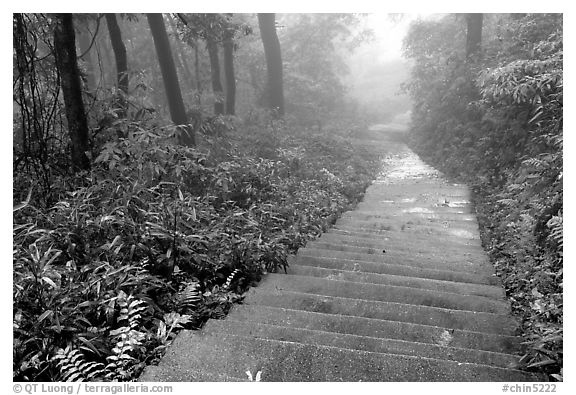 The staircase above Hongchunping. Emei Shan, Sichuan, China (black and white)