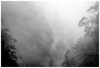 Cliffs and trees in mist between Hongchunping and Xiangfeng. Emei Shan, Sichuan, China (black and white)