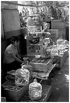 Bird Market. Guangzhou, Guangdong, China ( black and white)