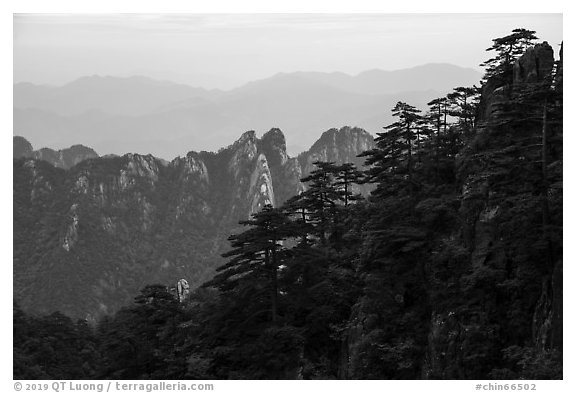 Forest and peaks. Huangshan Mountain, China (black and white)
