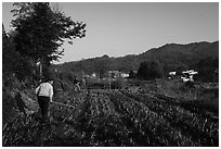 Villagers working in the fields. Xidi Village, Anhui, China ( black and white)
