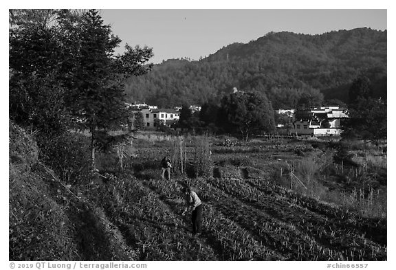 Villagers cultivating fields. Xidi Village, Anhui, China (black and white)