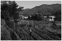 Villagers cultivating fields. Xidi Village, Anhui, China ( black and white)