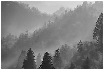 Forested hills with fog. Xidi Village, Anhui, China ( black and white)