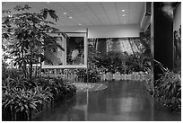 Room with plants and nature photos, Taoyuan Airport. Taiwan (black and white)