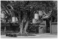 Lanterns hanging from tree, Confuscius Temple. Taipei, Taiwan (black and white)