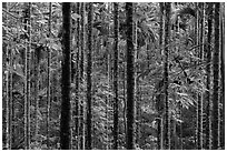Dense forest with green leaves. Sun Moon Lake, Taiwan (black and white)