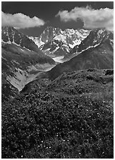 Meadow with wildflowers with Grandes Jorasses in the background, Chamonix. France ( black and white)