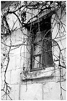 Window with dried grapes. Loire Valley, France ( black and white)