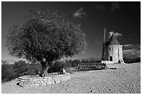 Olive tree and Alphonse Daudet windmill, Fontvielle. Provence, France (black and white)