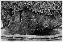 Moss-covered thermal fountain. Aix-en-Provence, France ( black and white)