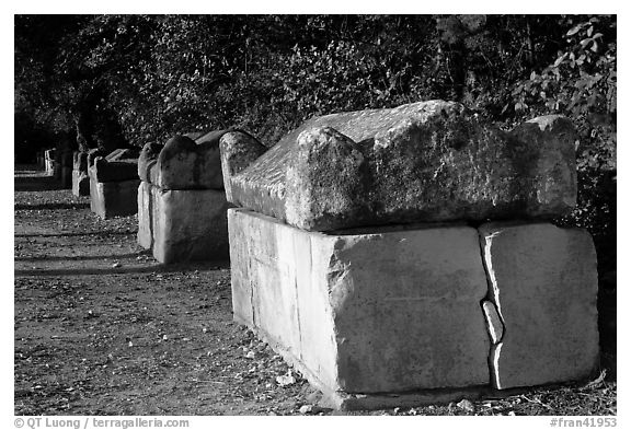 Roman Sarcophagi, Alyscamps. Arles, Provence, France (black and white)