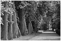 Forested alley, Fontainebleau Palace. France (black and white)