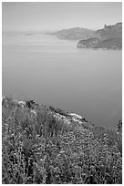Wildflowers and cliffs dropping into the Mediterranean seen from Route des Cretes. Marseille, France (black and white)