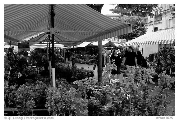 Flower Market, Nice. Maritime Alps, France (black and white)