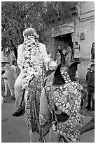 Flower-covered groom riding on horse. Jodhpur, Rajasthan, India ( black and white)
