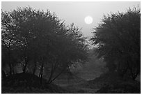 Trees at sunrise, Keoladeo Ghana National Park. Bharatpur, Rajasthan, India (black and white)
