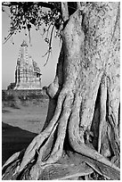 Tree and Javari Temple, Eastern Group. Khajuraho, Madhya Pradesh, India (black and white)