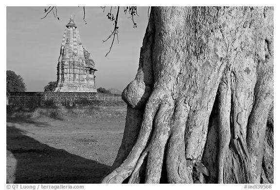 Javari Temple and tree, Eastern Group, late afternoon. Khajuraho, Madhya Pradesh, India (black and white)