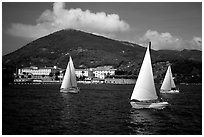 Sailboats cruising, La Spezia. Liguria, Italy (black and white)
