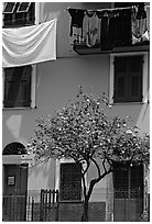 Green house facade with tree and hanging laundry, Riomaggiore. Cinque Terre, Liguria, Italy (black and white)