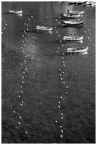 Buoy lines and fishing boats seen from above, Vernazza. Cinque Terre, Liguria, Italy (black and white)