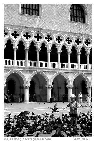 Boy feeding the pigeons in fron tof the Palazzo Ducale,  Piazza San Marco (Square Saint Mark), mid-day. Venice, Veneto, Italy (black and white)