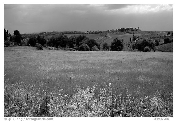Countryside. Tuscany, Italy (black and white)