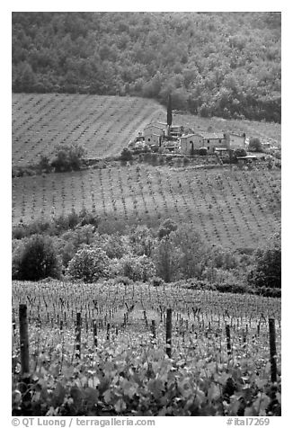 Vineyard in the Chianti region. Tuscany, Italy (black and white)