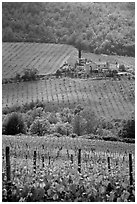 Vineyard in the Chianti region. Tuscany, Italy ( black and white)