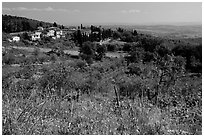 Flowers and rural landscape, Chianti region. Tuscany, Italy ( black and white)