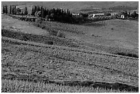 Vineyard, cypress, and houses,  Chianti region. Tuscany, Italy ( black and white)