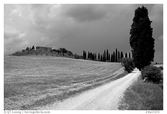 Path lined with cypress trees, Le Crete region. Tuscany, Italy (black and white)