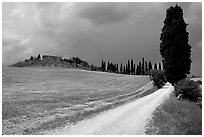 Path lined with cypress trees, Le Crete region. Tuscany, Italy ( black and white)