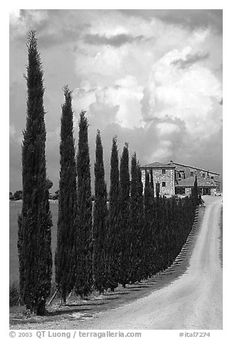 Rural road lined with cypress trees, Le Crete region. Tuscany, Italy (black and white)