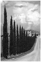 Rural road lined with cypress trees, Le Crete region. Tuscany, Italy ( black and white)