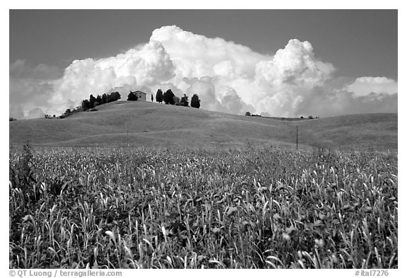 Field and distant ridge with cypress and house. Tuscany, Italy (black and white)