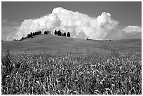 Field and distant ridge with cypress and house. Tuscany, Italy ( black and white)