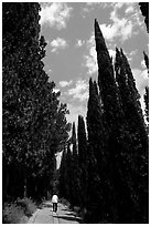 Alley bordered by cypress trees. Tuscany, Italy ( black and white)