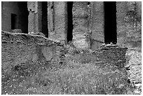 Red poppies and ruins of the Praetorium, Villa Adriana. Tivoli, Lazio, Italy ( black and white)
