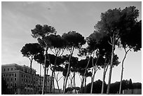Pines trees and houses. Rome, Lazio, Italy (black and white)