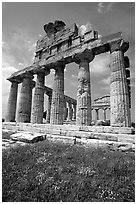 Ruins of Greek Temple of Ceres. Campania, Italy ( black and white)
