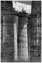 Columns of Temple of Neptune in Doric style. Campania, Italy ( black and white)